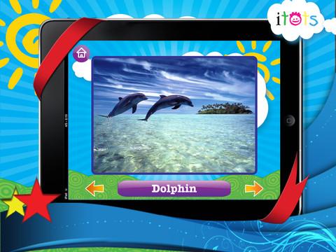 Dolphins iPad App Animal Sounds