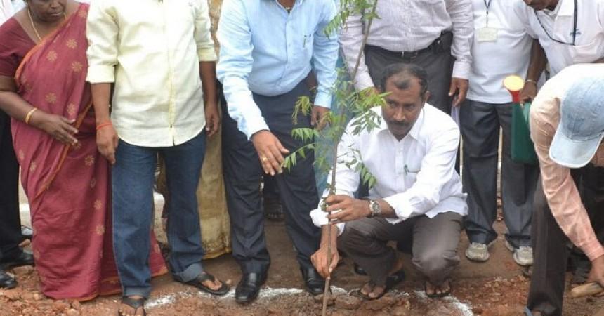 Gangavaram Port Celebrates World Environment Day 2015