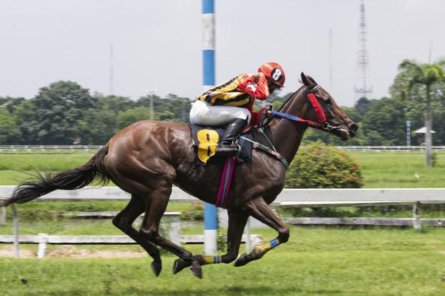 South Carolina Horse Racing